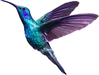 finscape hummingbird 3